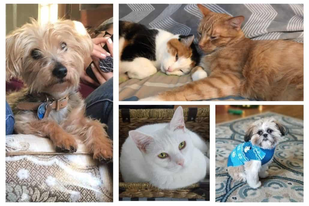 Snapshots of furry friends from the Anderson Technologies family (clockwise): Emmett, Spoons & Sonny Boy Williamson, Sophie, Luna