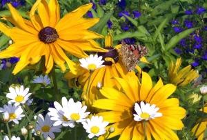 """""""Blume mit Schmetterling und Biene 1uf"""" by Vulkan CC-BY-SA-3.0-migrated."""