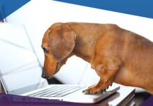 Dog on a laptop